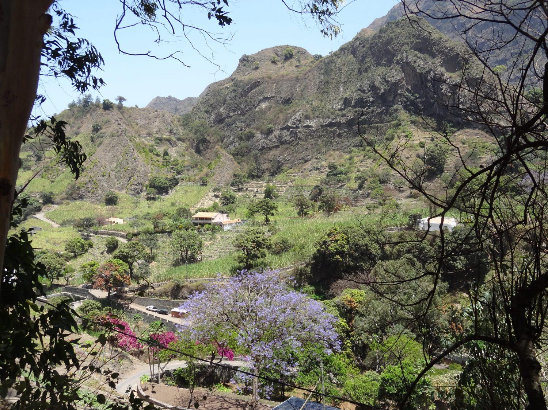 kaapverdie wandeling jacaranda