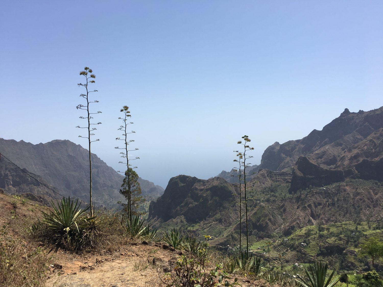 kaapverdie wandeling agave