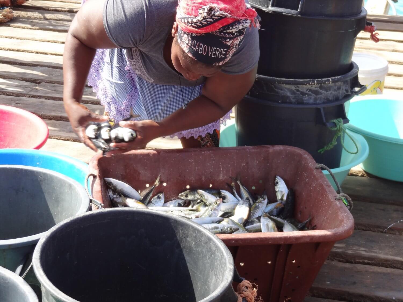 Sal Kaapverdië verse vis