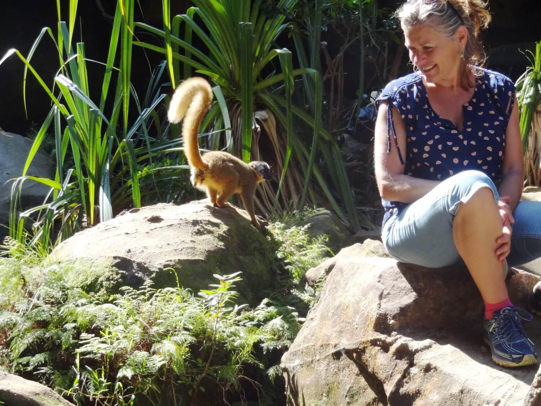 Madagascar Isalopark ontmoeting met een lemuur