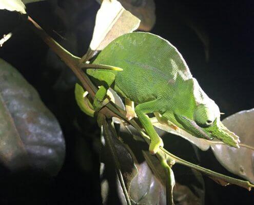 Madagascar Amber Mountains nachttour