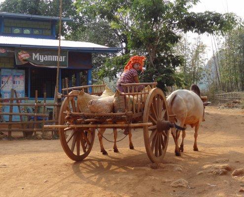 Myanmar trekking ossenkar