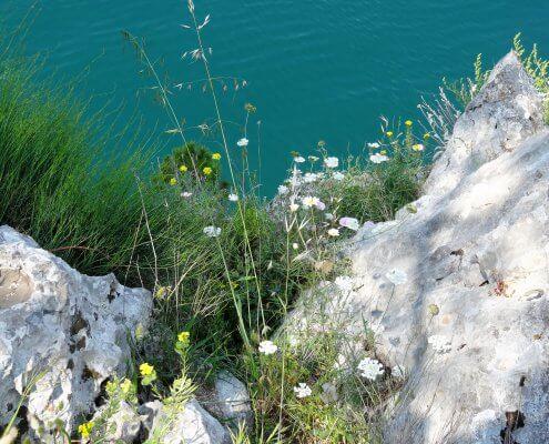 Kroatië Sibenik Sveit Ante bloei