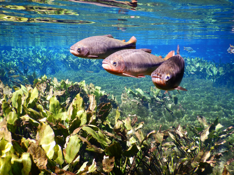 Bonito snorkelen bij Aquarium Natural