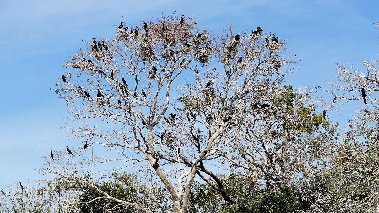 Pantanal vogelparadijs