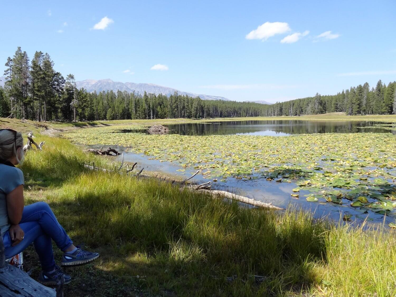 Grand Teton Heron Pond