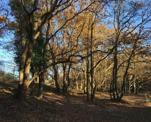 Duin tot Duin wandeling door de bossen