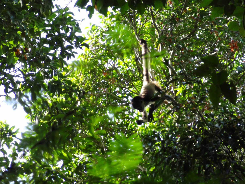 Yucatan Calakmul wildlife