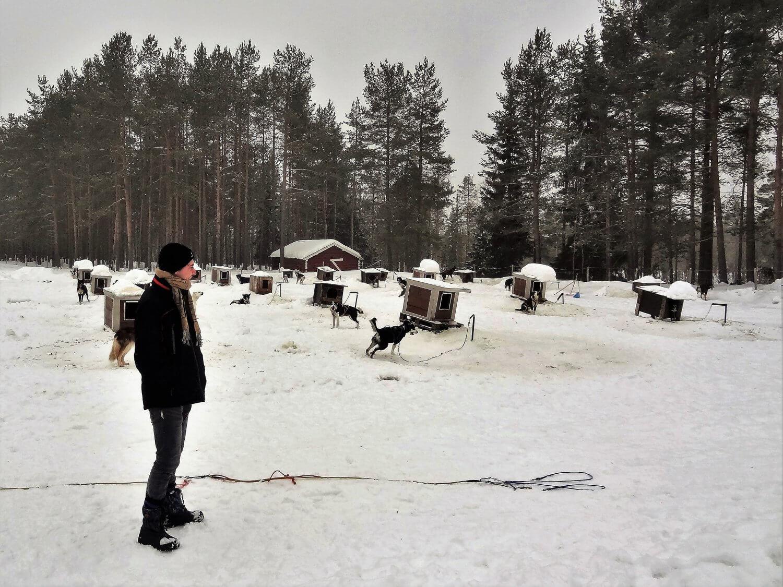 Noorwegen Huskyfarm honden