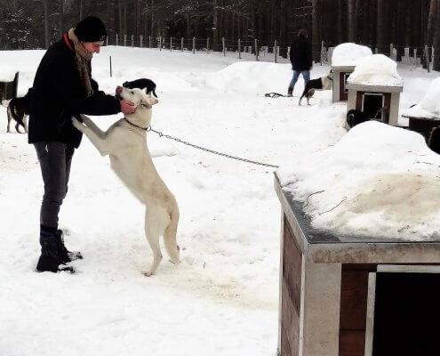 Noorwegen Huskyfarm honden knuffelen