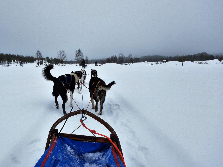 Noorwegen Huskyslee op pad