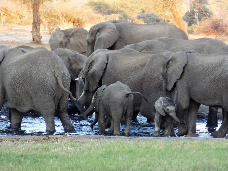 Botswana Senyati Olifantenspektakel