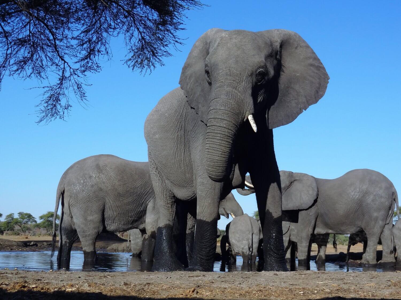 Botswana Senyati Waterhole