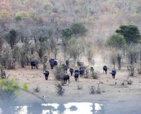 Zimbabwe Zambezi National Park