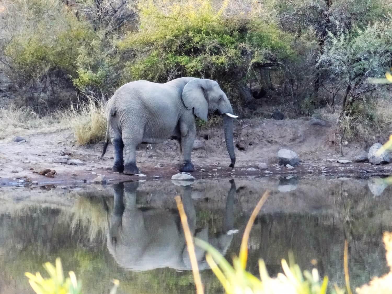 Marakele gespiegelde olifant